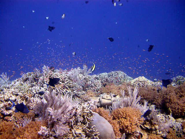 Lekuan II, Bunaken Marine Park. Photo by Matt Kieffer