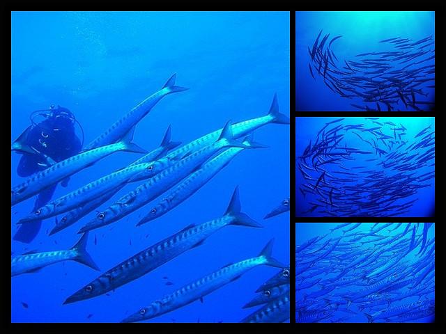 Barracuda-rhapsody-Ustica