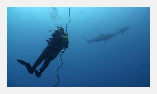 Simon-Sharks-Cuba
