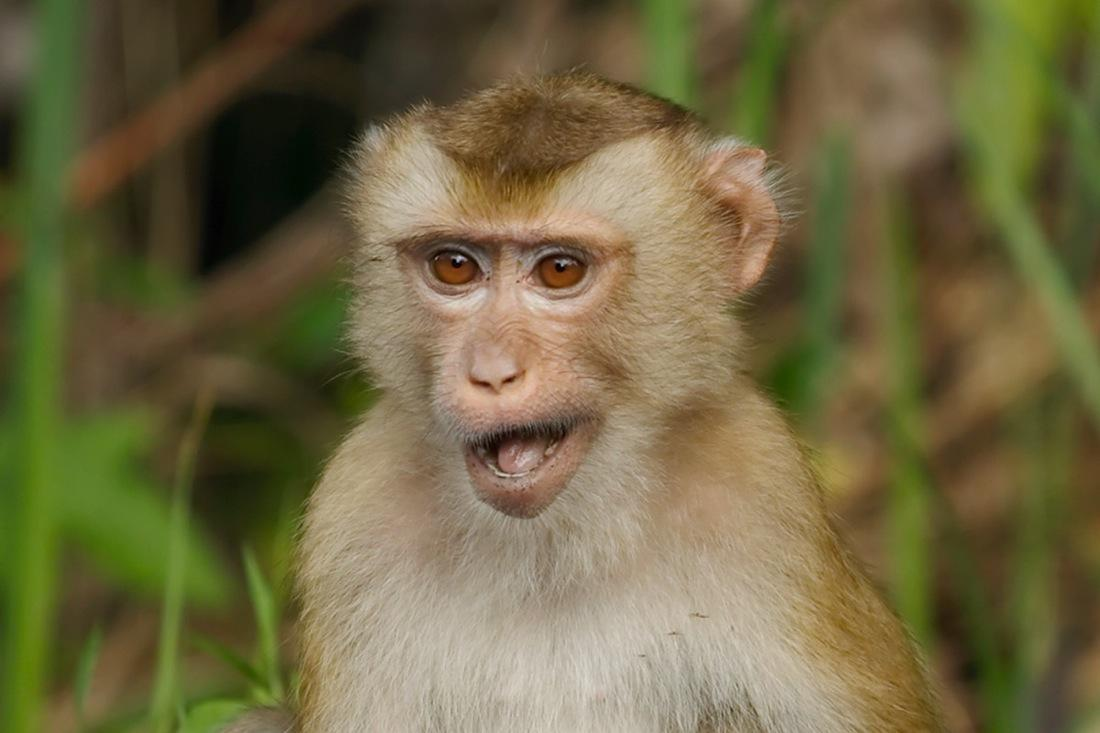 Monkey at Khao Yai, Photo by Kit Johnson