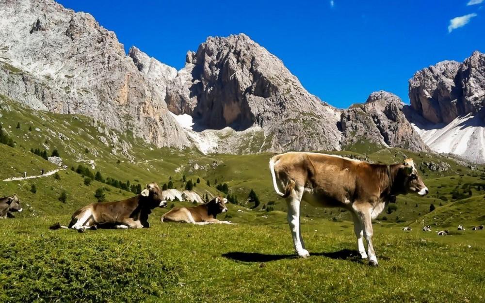 Dolomites, Bucholic Landscape