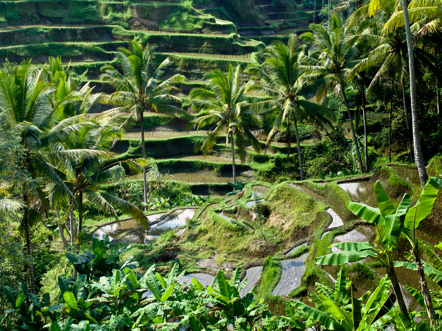 Rice-Terraces-Bali