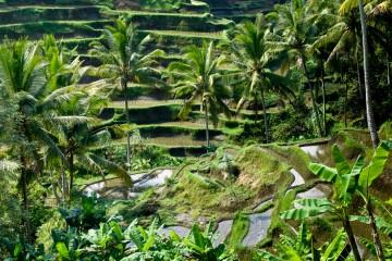 Bali-Terraces