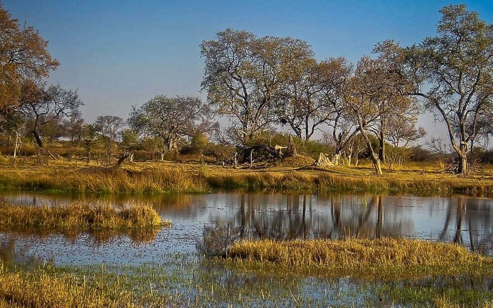 Botswana-Moremi-Reserve
