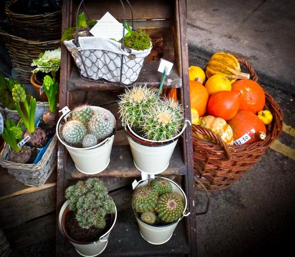 Borough-Market-Cactus