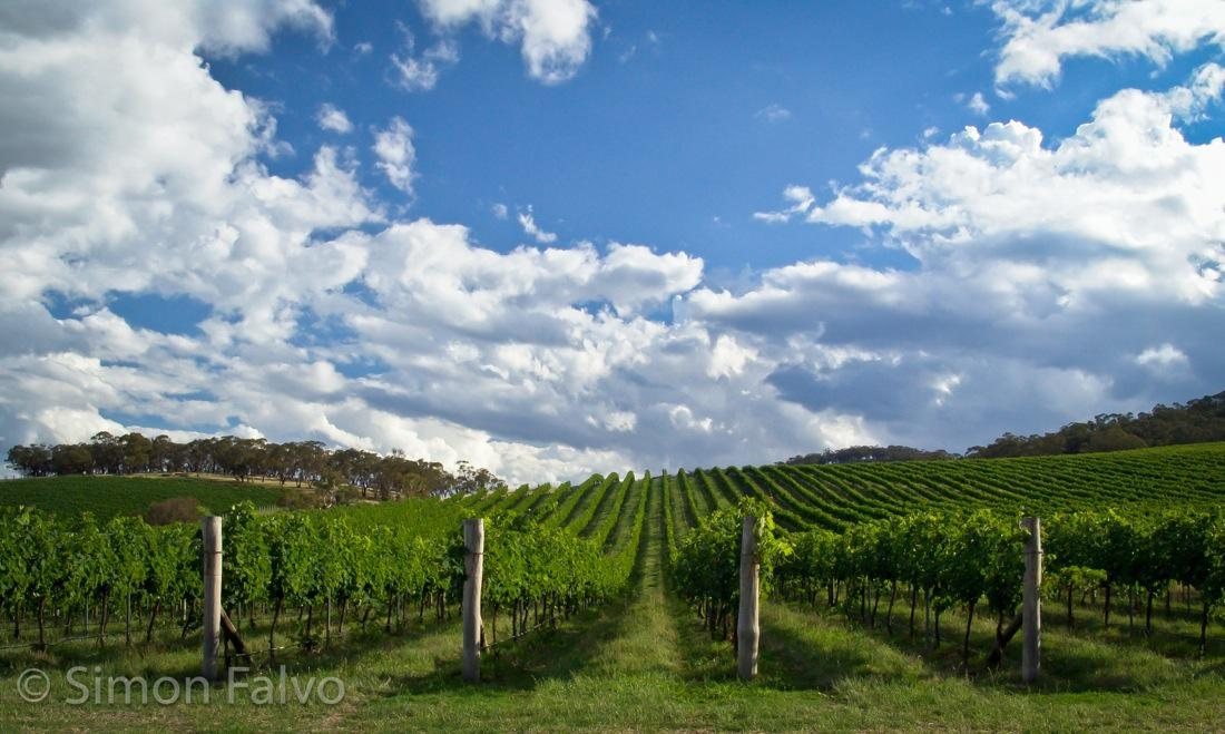 Australia-Vineyards-NSW