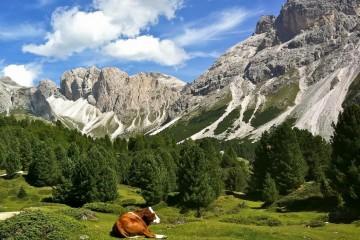 Italy, Dolomites Bucolic Landscape