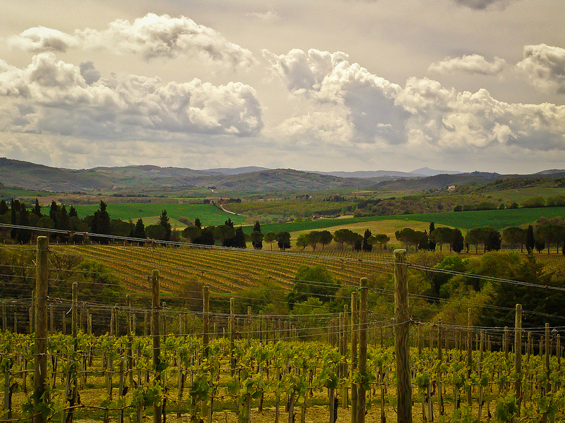 Italy, Umbria Vineyard Hills