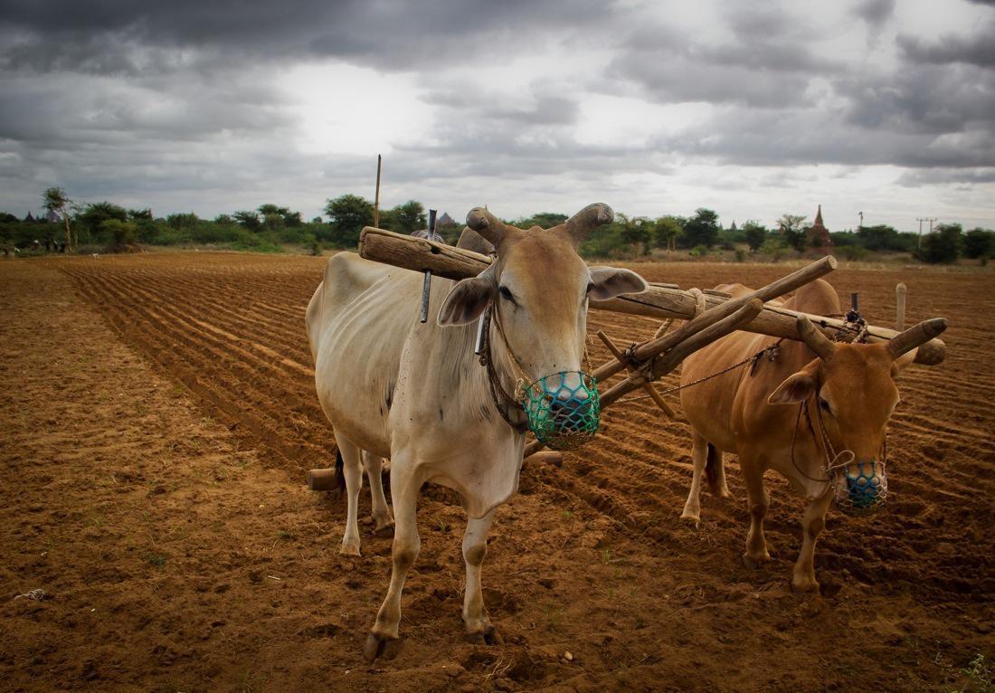 Burma Rural Life