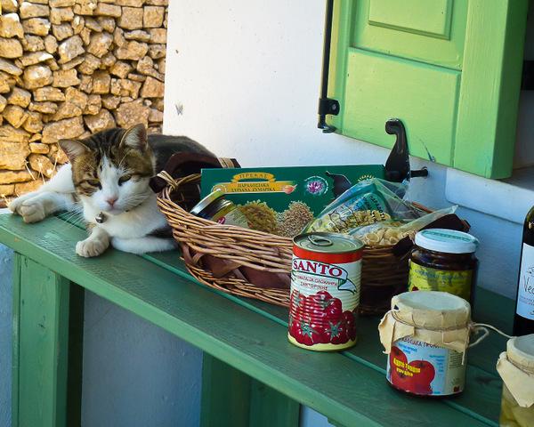 Folegandros cat
