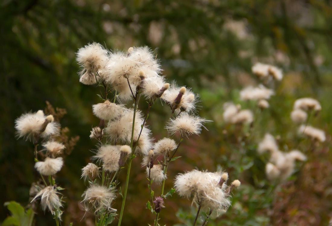 Autumn Delicate White Flowers