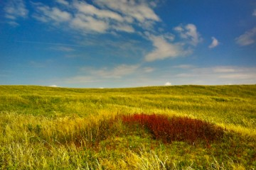 New-Plymouth-Coastal-Walkway-Fields.jpg