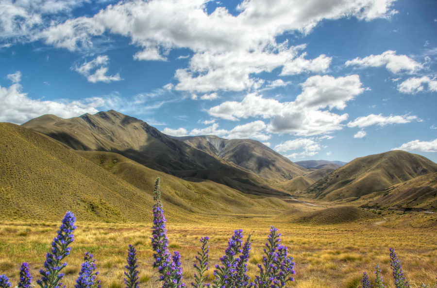 Golden-Central-Otago
