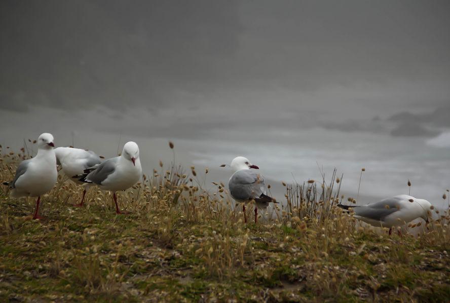 Seagulls-on-the-Beach