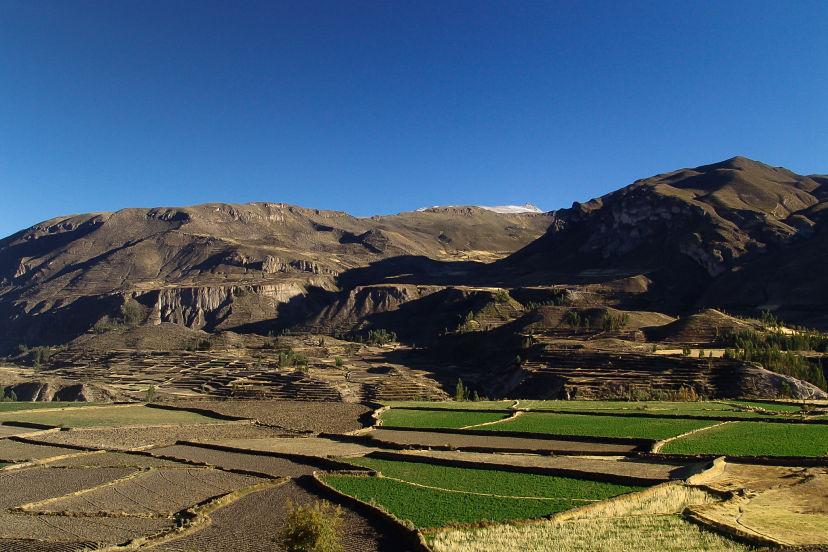 Peru, Green Terraces at Colca Canyon