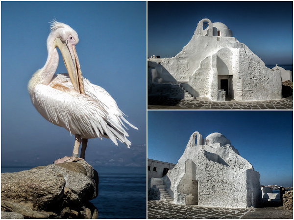 White Mykonos and Petros the Pelican