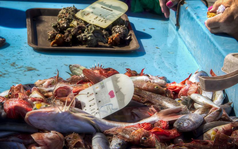 Marseille Vieux Port Fish Stall