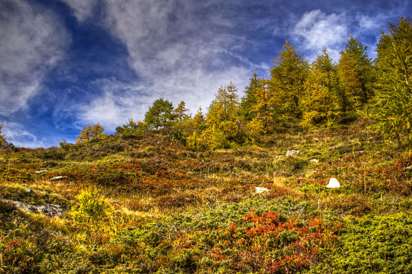 Autumn Colors in Switzierland
