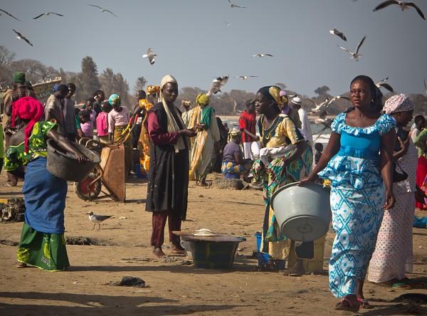Gambia, Tanji Fish Market