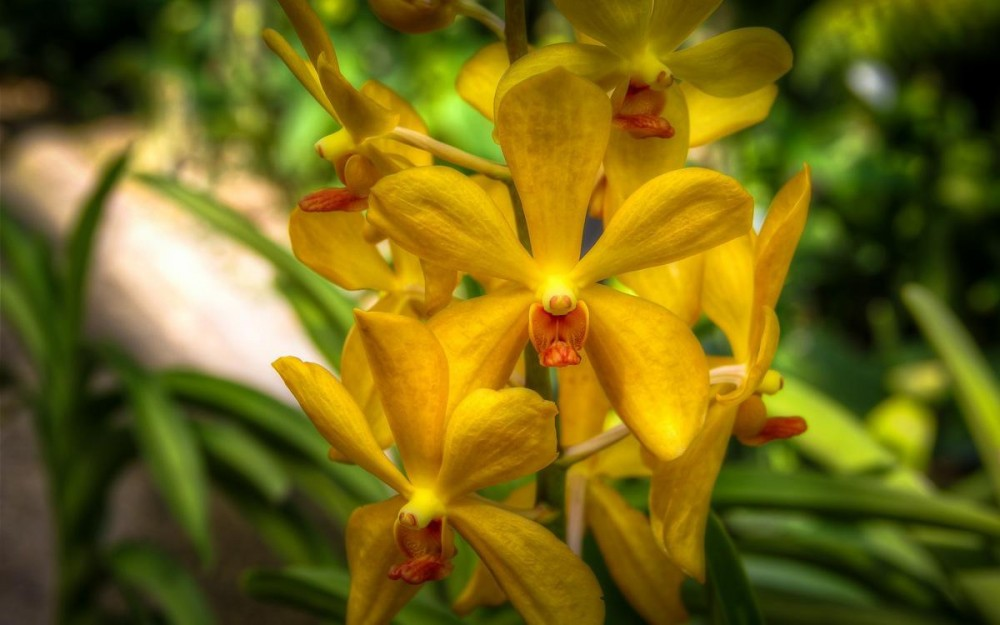 Yellow Orchid at Kuala Lumpur Orchid Gardens