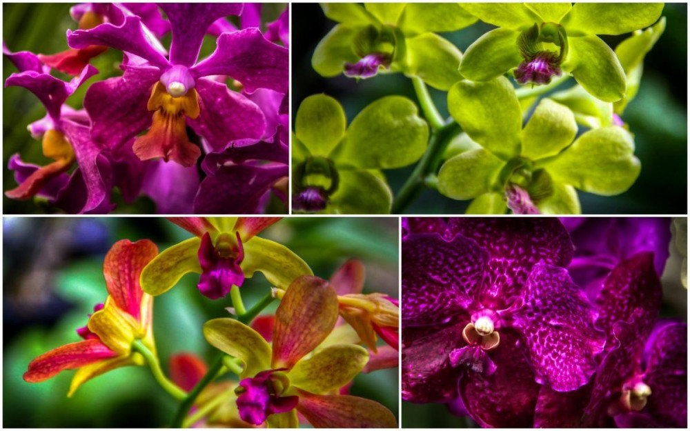 Kuala Lumpur Orchid Gardens, Collage