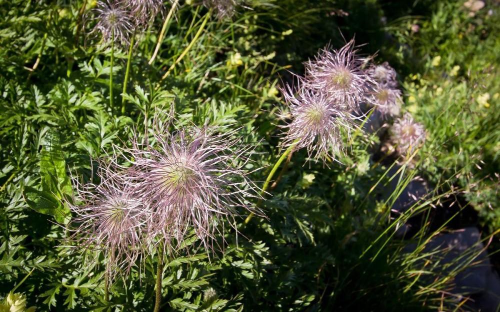 Schynige Platte, Alpine Garden