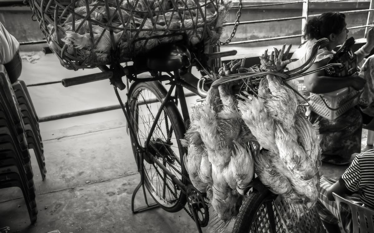 Yangon, Poultry on the Ferry