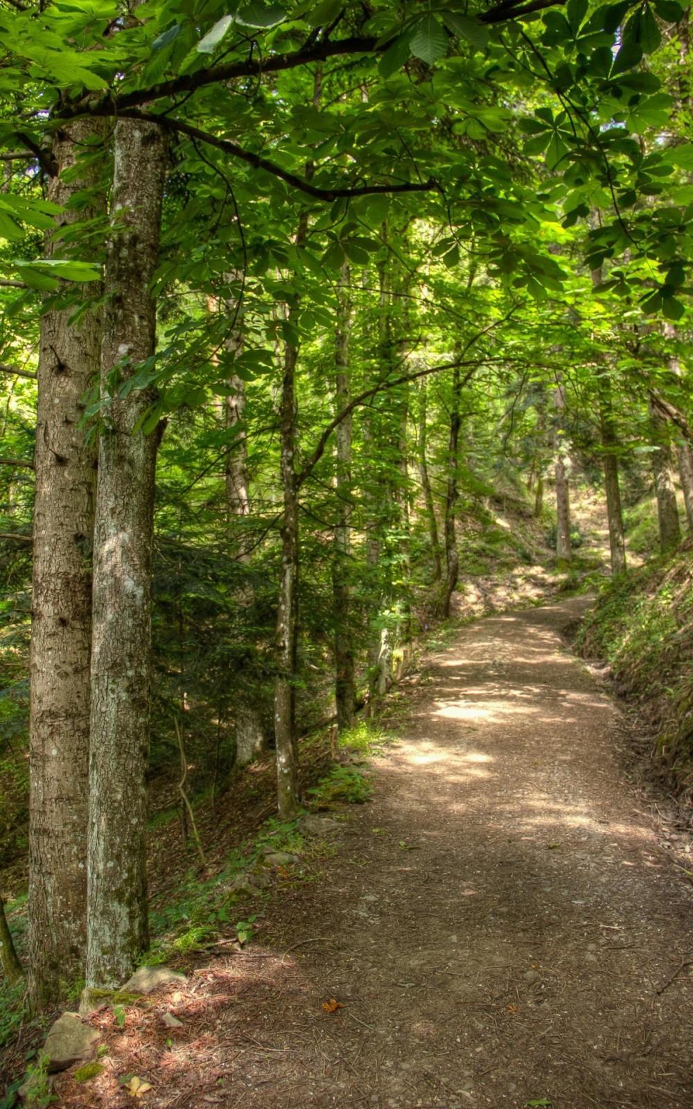 The Forest in Porretta Terme