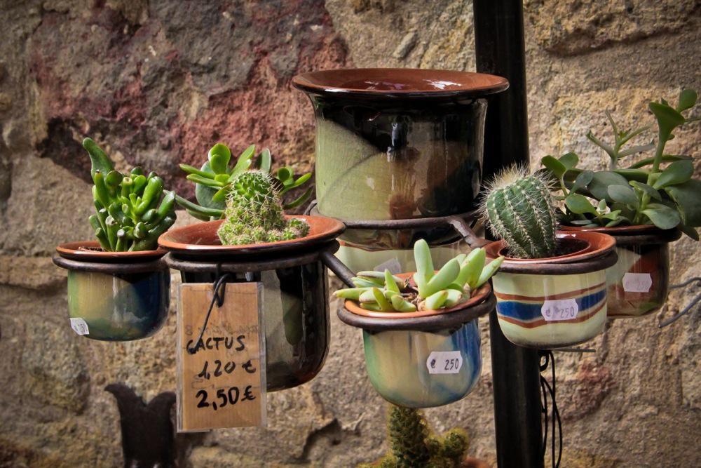 Costa Brava, Pals, Small Cactus
