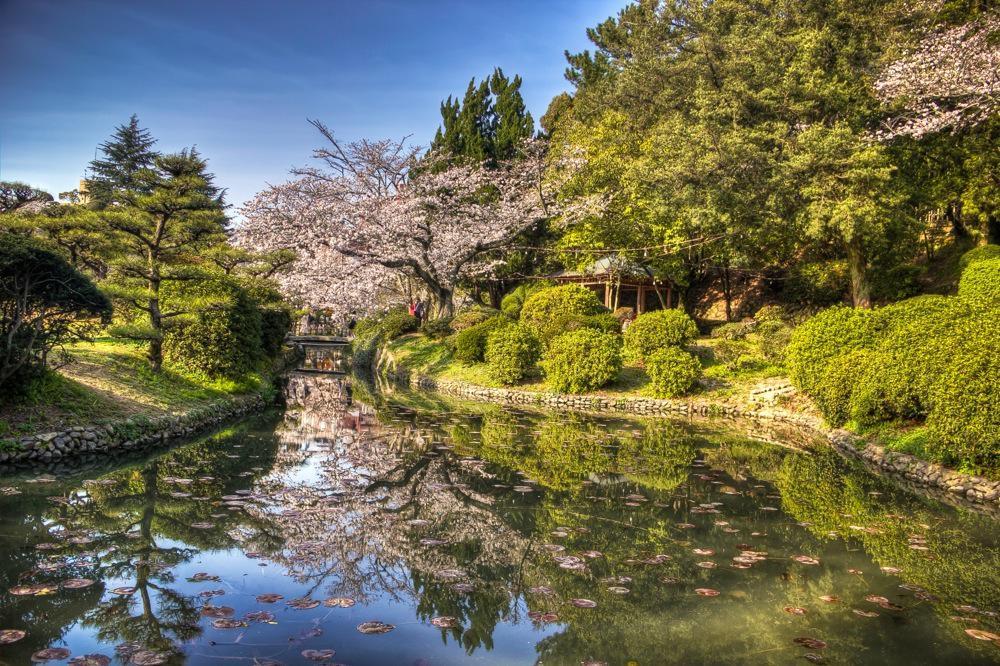 Japan, Sakura at Dogo Park