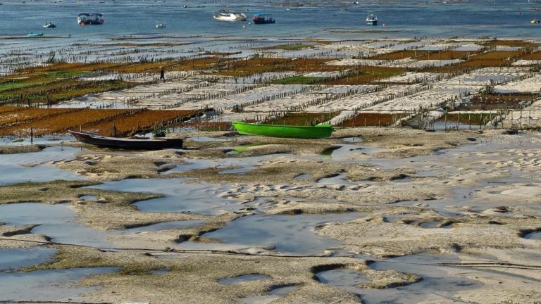 Fishing Boats at Low Tide - Cover