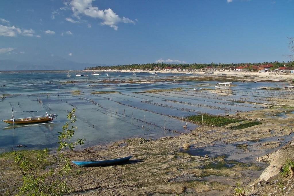 Low Tide in Nusa Lembongan