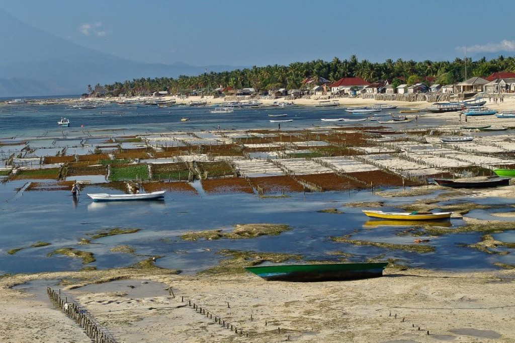 Nusa Lembongan, Fishing Boats at Low Tide