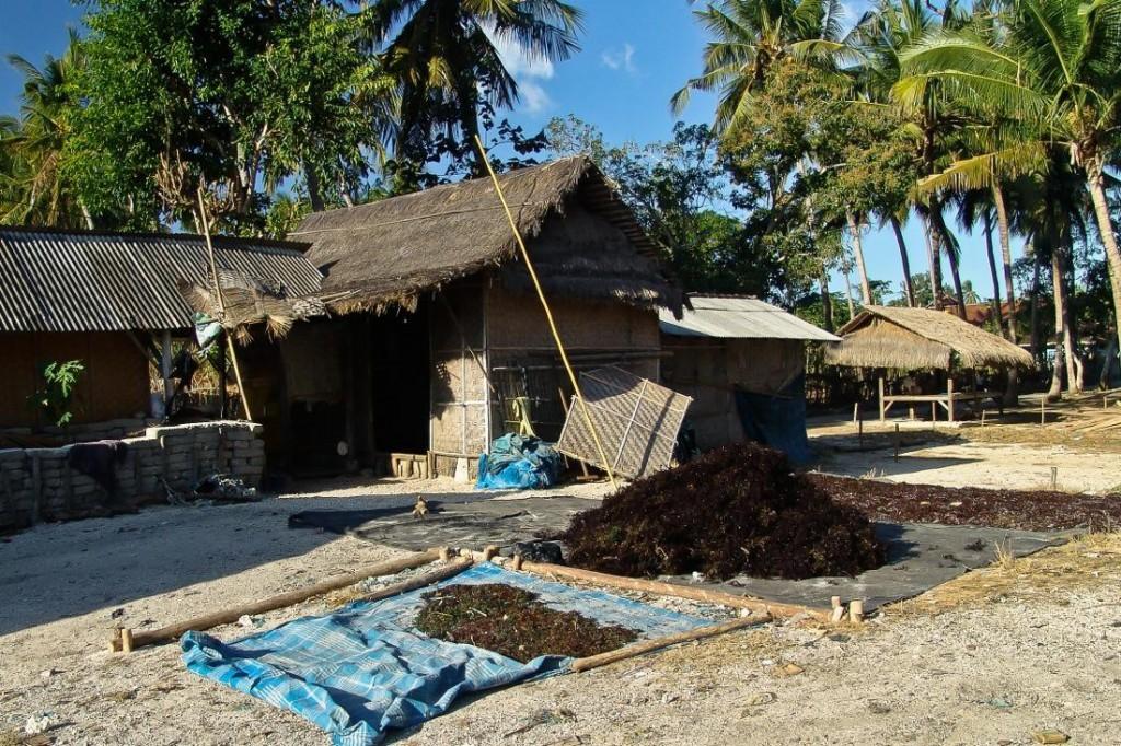 Nusa Lembongan, Seaweed Drying in the Village
