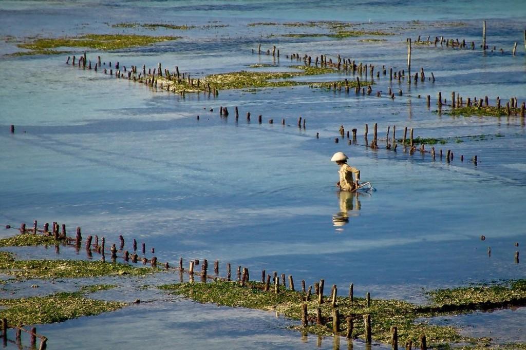 Seaweed Farming in Nusa Lembongan