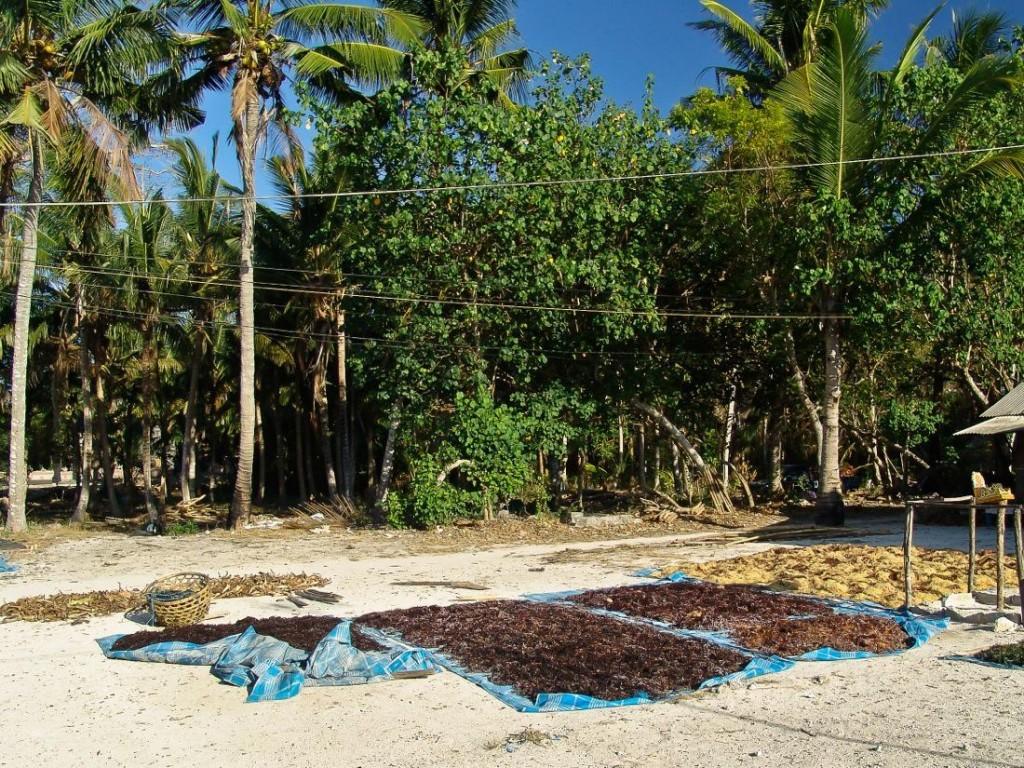 Seaweeds Drying
