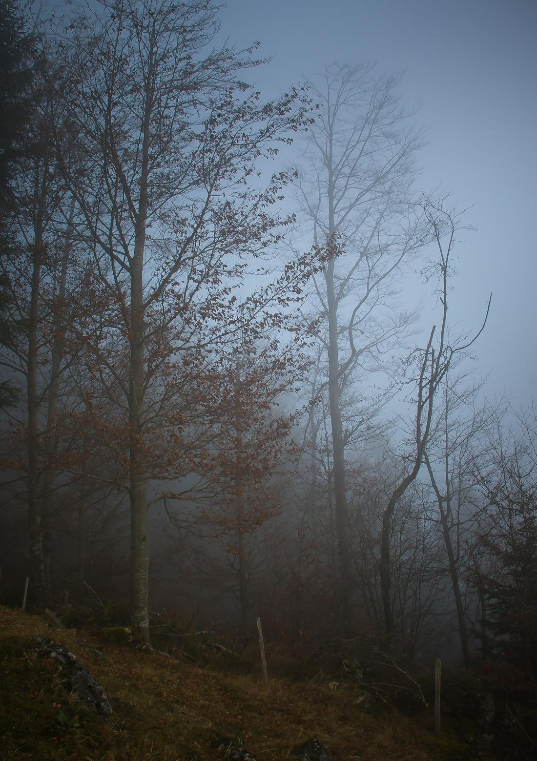 Saanenland, Hiking in the Fog