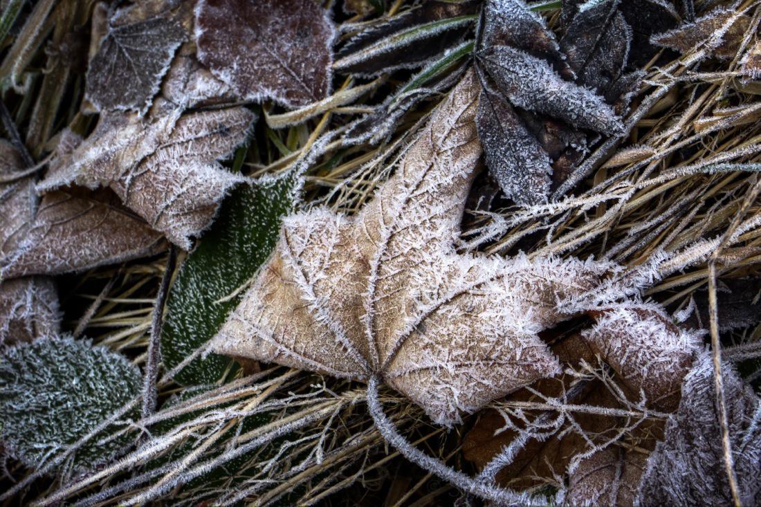Still Life under the Frost