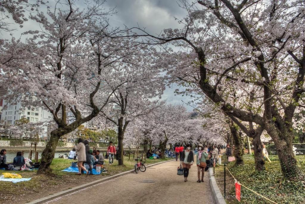 Strolling under the Sakura in Hiroshima