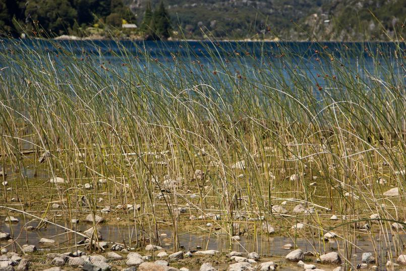 Lago Moreno Shore