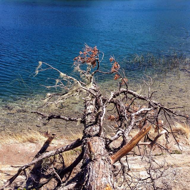 Bariloche, Blue Lago Moreno