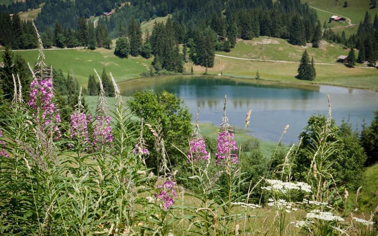 Lauenensee in Summer