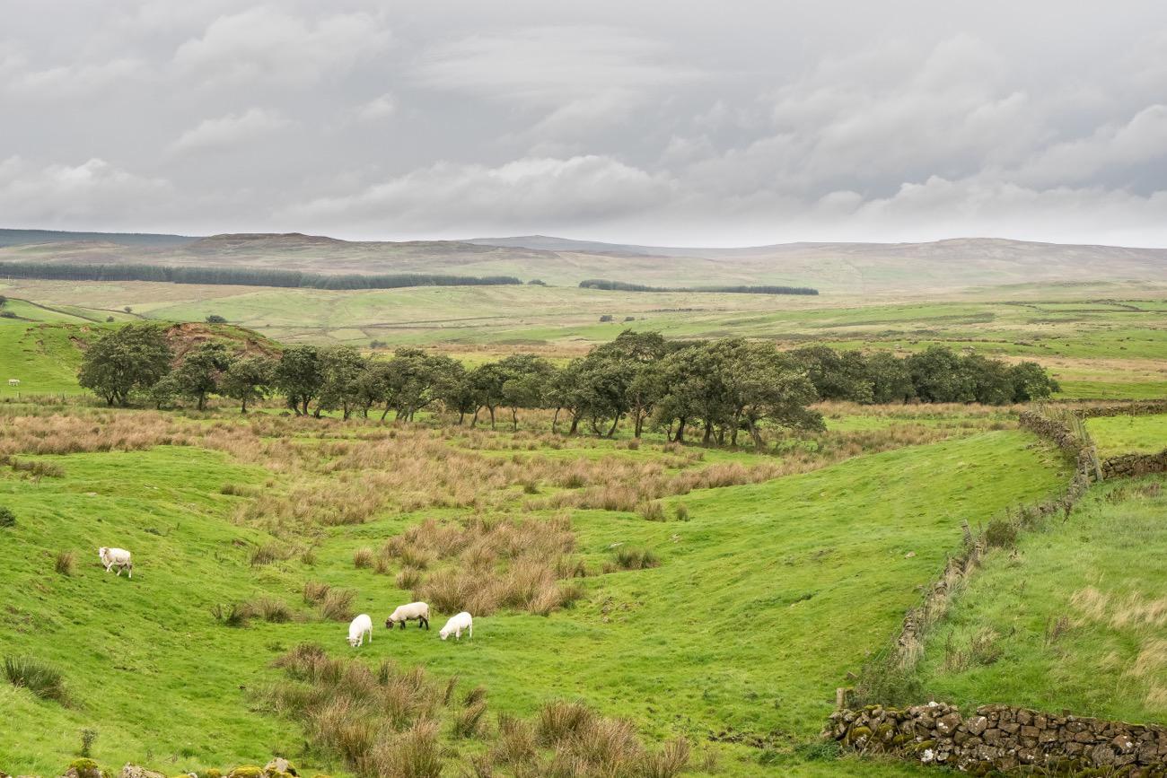 northern-ireland-glenarm-pastures