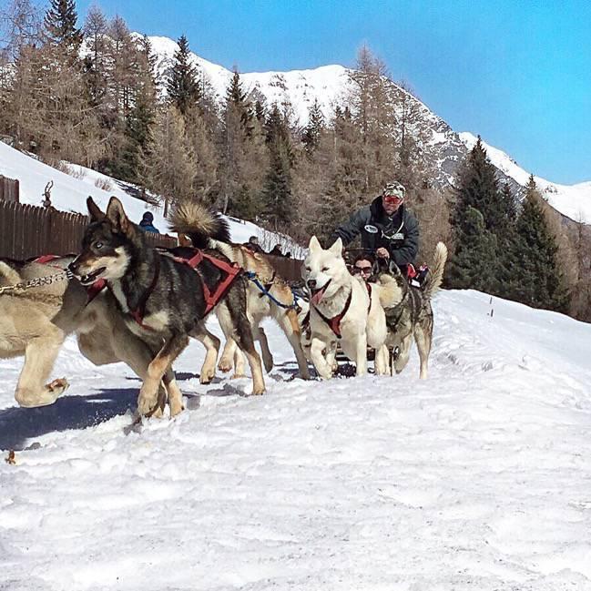 Alaskan huskies in Arnoga