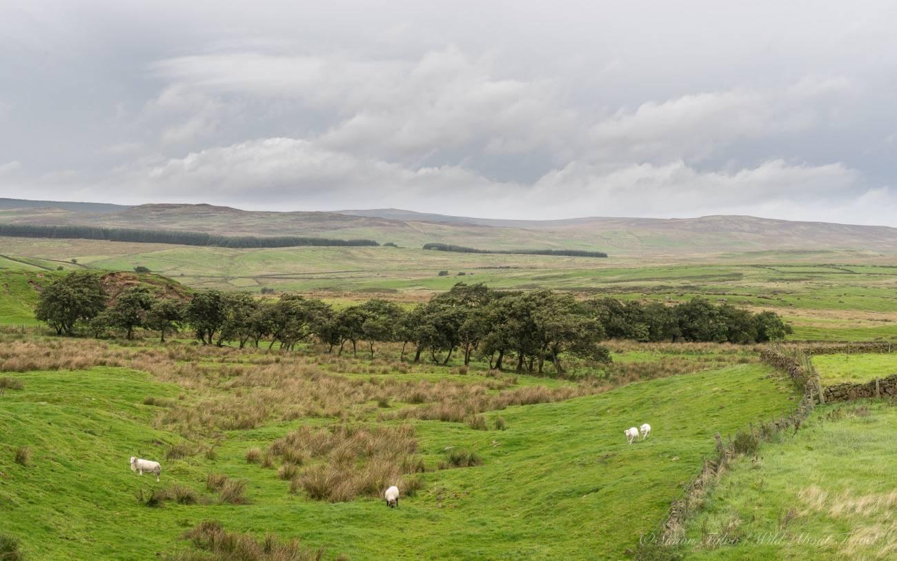 northern-ireland-countryside