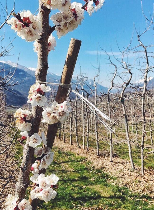 Spring-in-Valtellina
