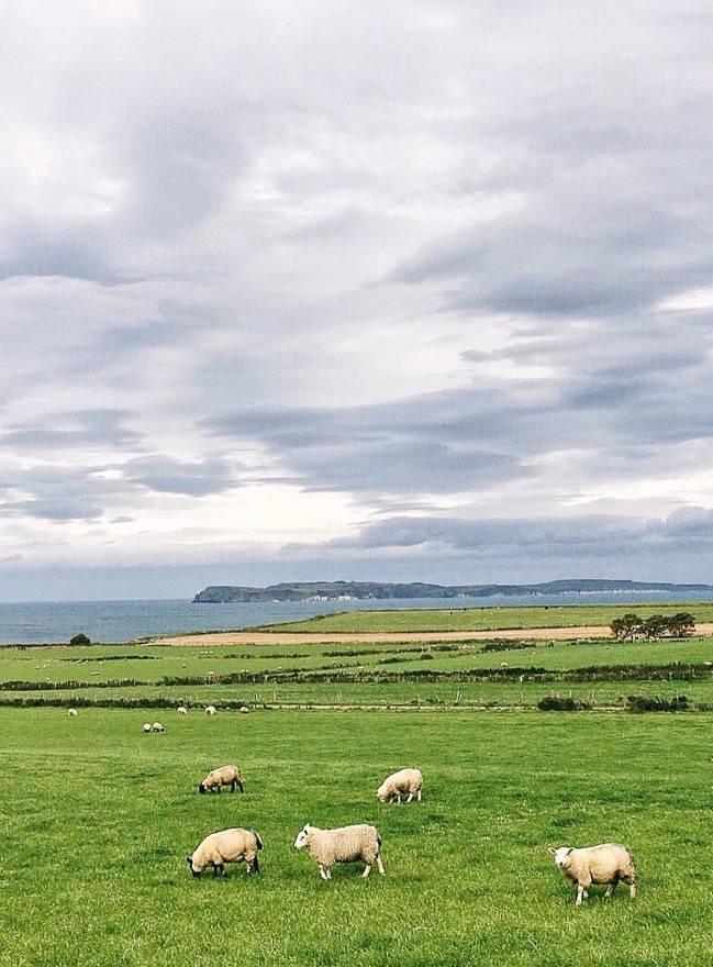Wild-Northern-Ireland