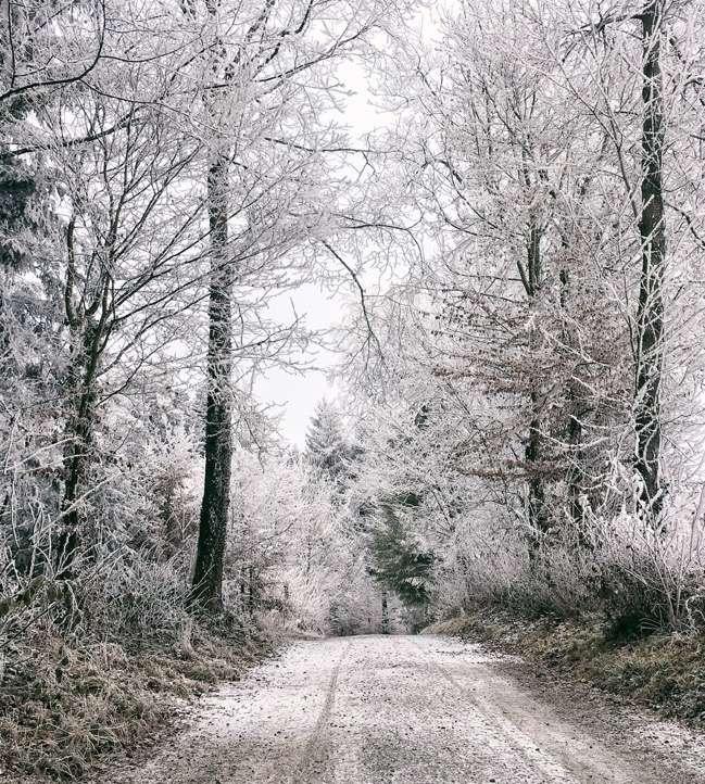 Switzerland White Winter
