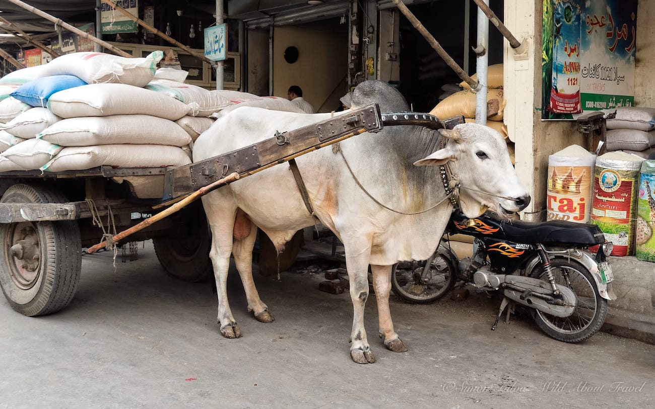 Lahore Ox Cart