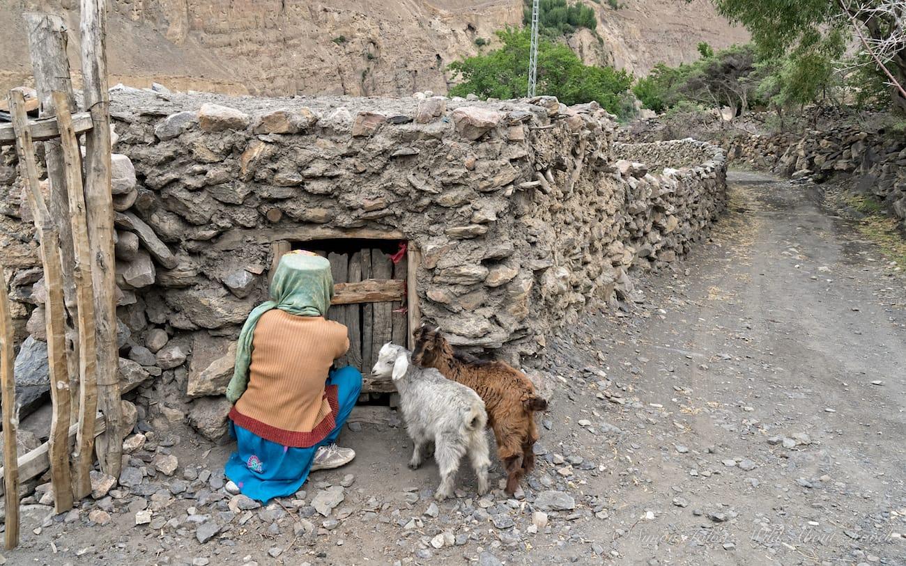Shimshal Village Life